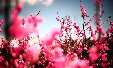 Extremadura registrará una primavera