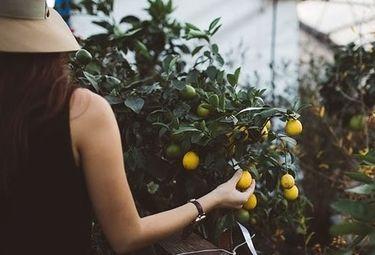 Mujeres ocuparán órganos de gestión de cooperativas extremeñas porcentaje similar a socias