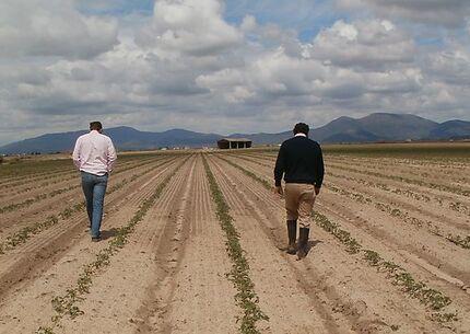 Cooperativas Extremadura organiza una jornada para analizar los seguros agrarios