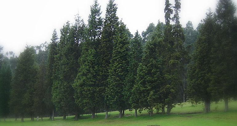 La junta de extremadura declara erradicado el foco del - Maderas del pino ...